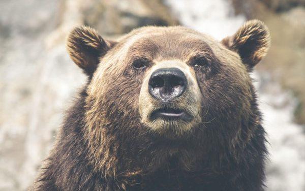 Poke the Bear!