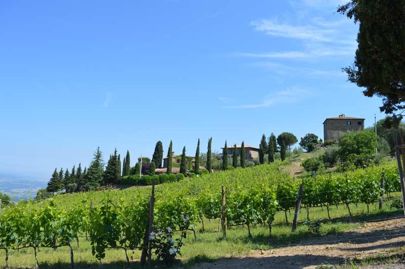 Vines2